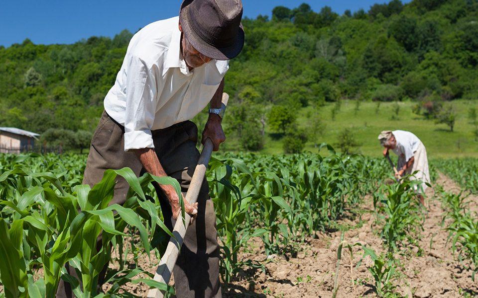 Saiba O Que É Pequena Propriedade Rural e Se Ela É Impenhorável